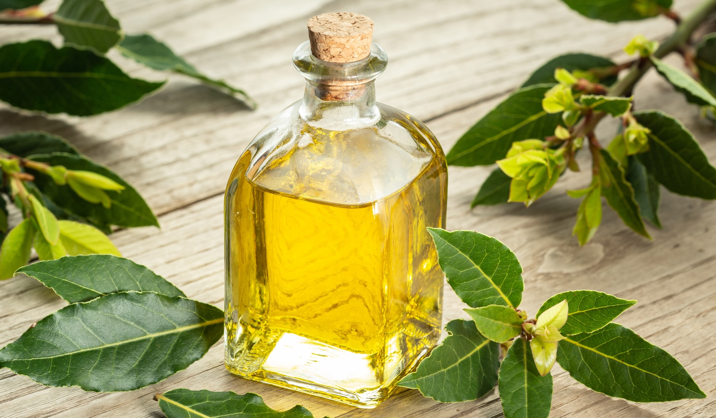 Monovarietal extra virgin olive oil